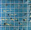 ホックニーのカメラワーク/David Hockneyのサムネール