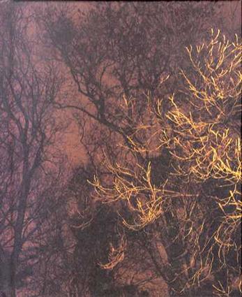 ポール・シーライト The Forest/Paul Seawright Val Williams編