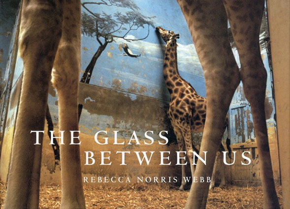 レベッカ・ノリス・ウェッブ写真集 The Glass Between Us: Reflections Of Urban Creatures/Rebecca Norris Webb