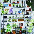 Large Shelf Still Life/ジョナス・ウッド/シオ・クサカのサムネール