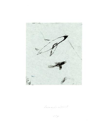 桜花/重野克明