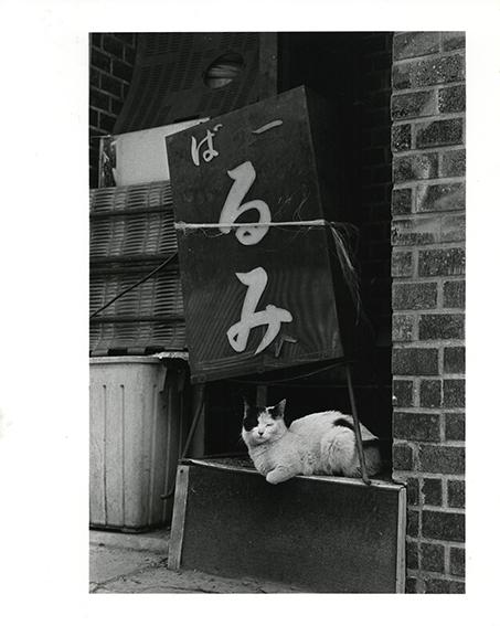 猫/武田花